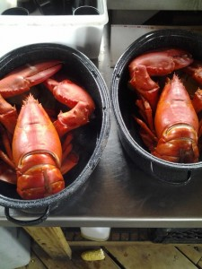Stewman's Lobsters