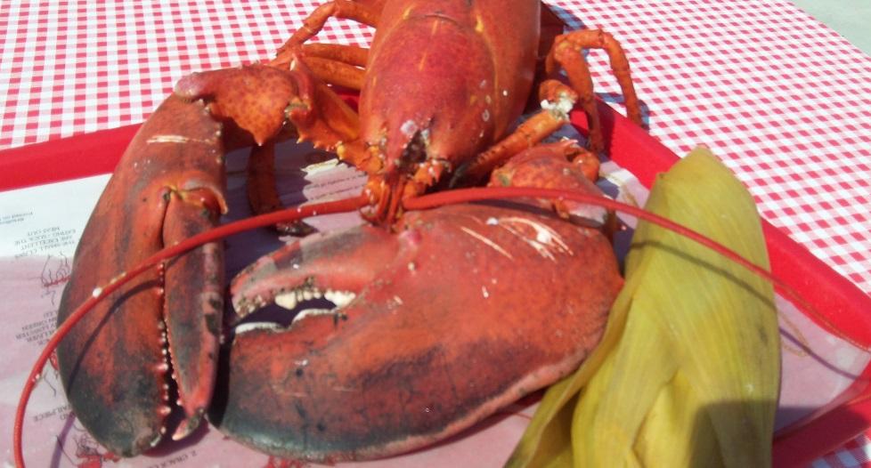 jumbo lobster